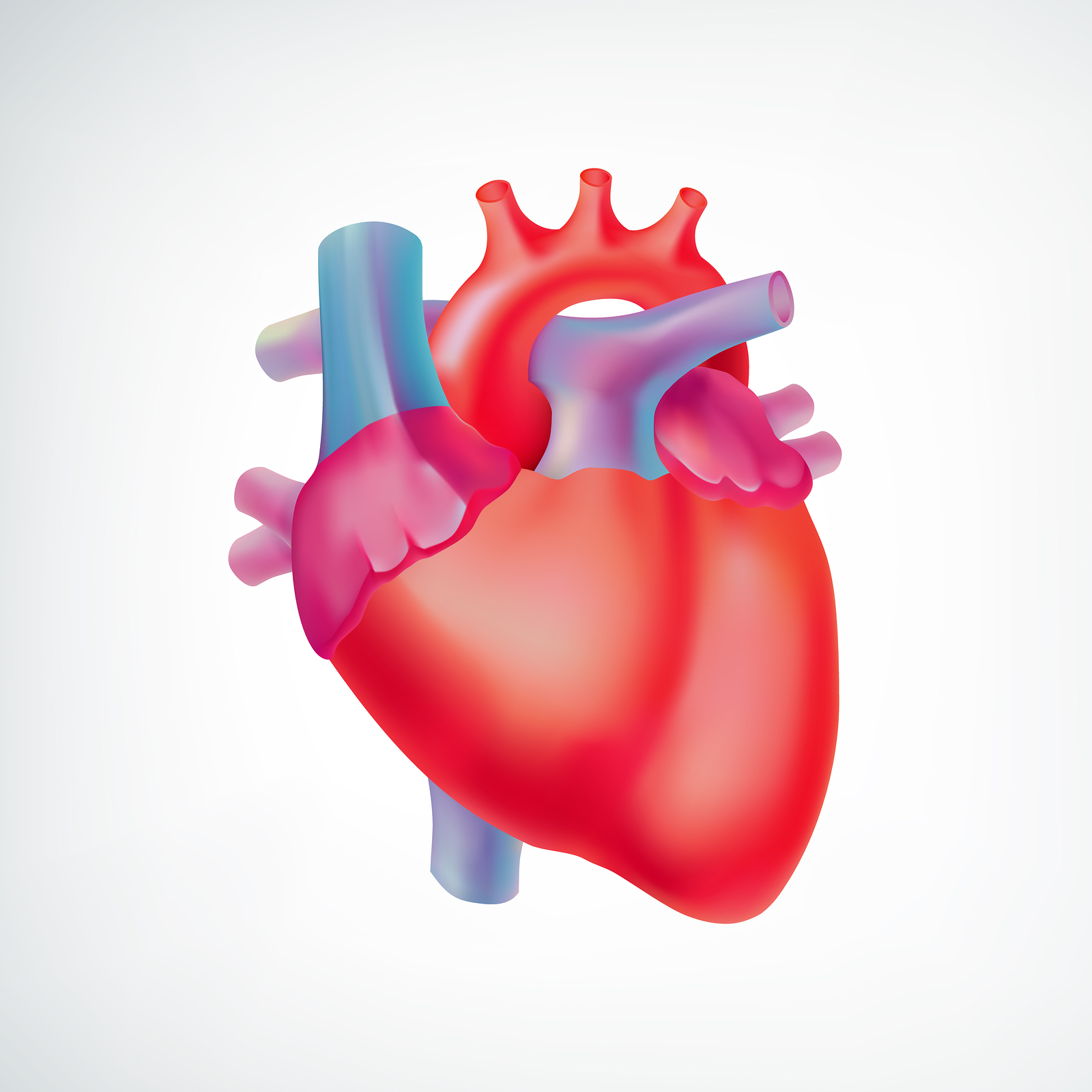 Medical light organ anatomic concept with colorful human heart on white background - Forest Medical Device Testing